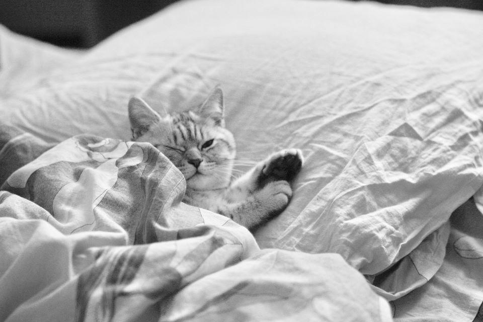 Funkcje poduszki chłodzącej na lato